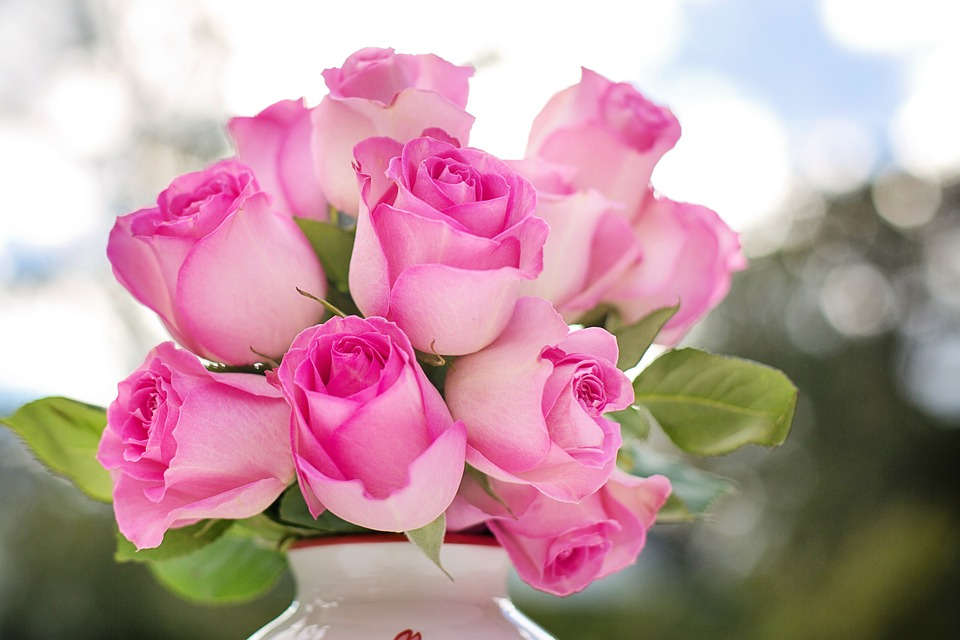 pink roses 2191636 960 720